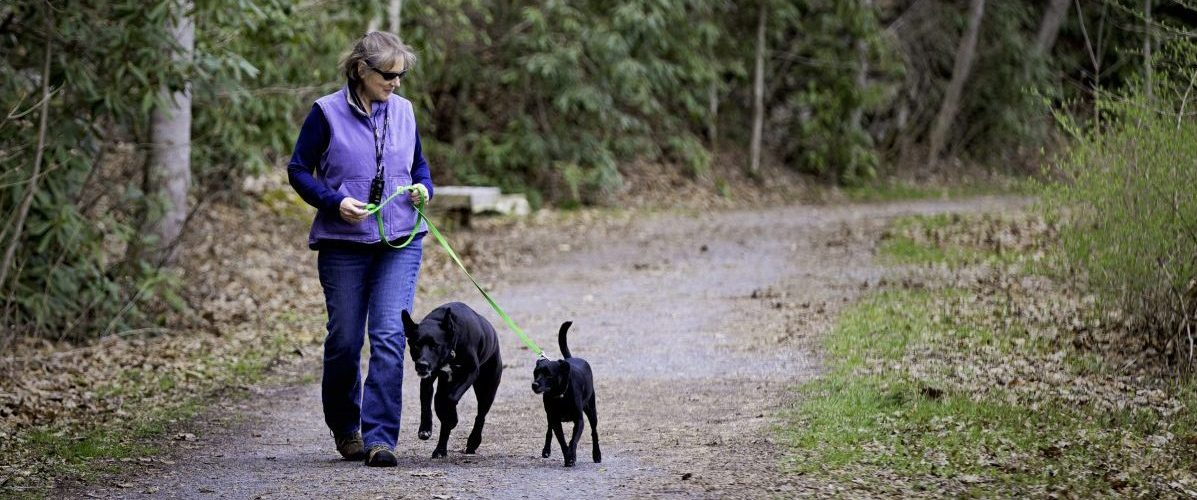 Scents along the trail your dog will loooooove image