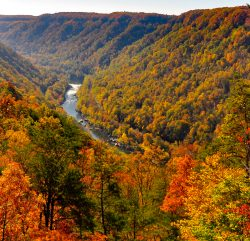 Autumn in New River Gorge, WV