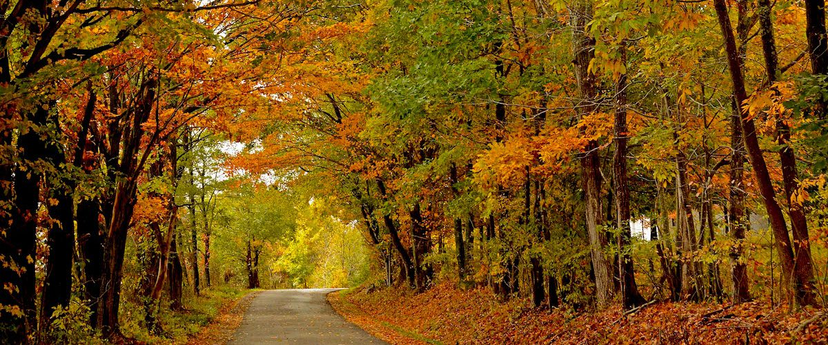 Single-lane road going through autumn woods, West Virginia