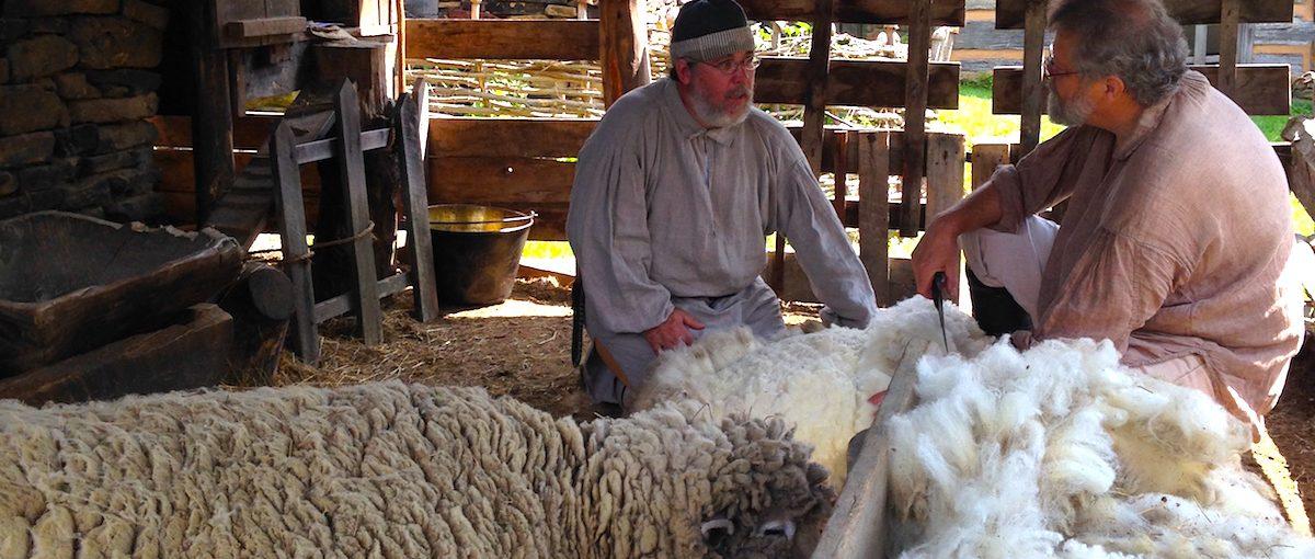 Two men shearing a sheep at Prickett's Fort, WV